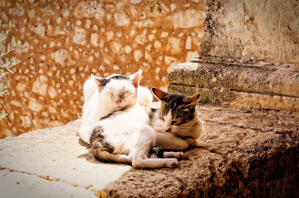 cat-648521_1280