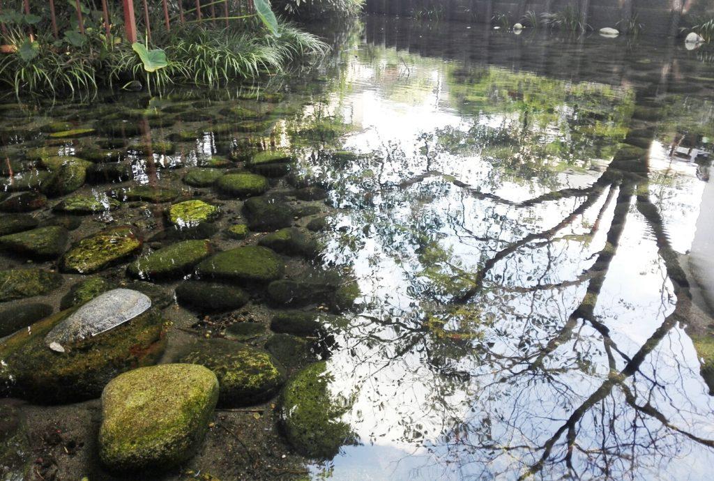 芋森神社泉2
