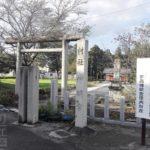 足利市指定天然記念物ニホンカワモズクを芋の森神社へ見に行く。