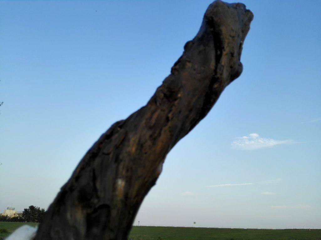 ゲットした流木
