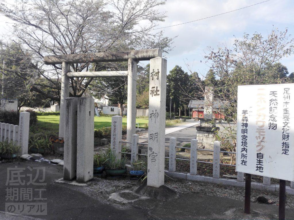 足利市指定天然記念物ニホンカワモズクを芋の森神社へ見に行く